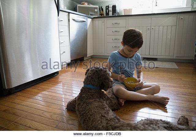 Hund beobachten junge Getreide auf Küchenboden Essen Stockbild