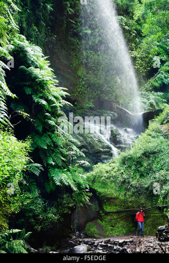 Laurel Wald, Los Tilos-Biosphären-Reservat, La Palma, Kanarische Inseln, Spanien, Europa Stockbild