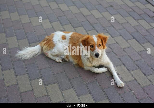 Traurig streunender Hund Essen warten Stockbild