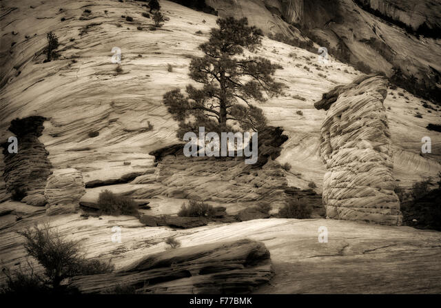 Zion Nationalpark, Utah Stockbild