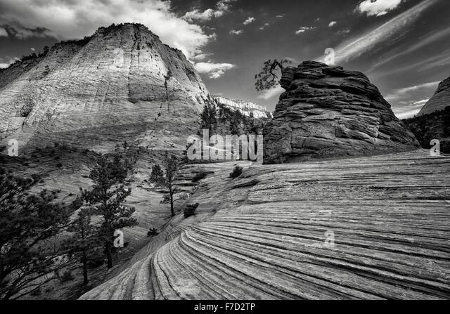 Bonai Baum.  Zion National Par, Utah Stockbild