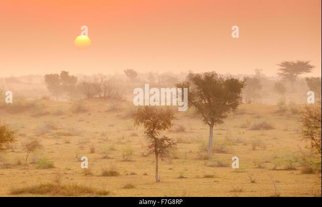 Sonnenaufgang in der Wüste Thar nahe Jaisalmer, Rajasthan, Indien Stockbild
