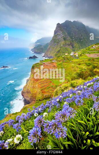 Madeira - Landschaft mit Blumen in der Nähe von Ponta Delgada, die Insel Madeira, Portugal Stockbild