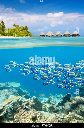 Malediven Insel - tropischen Unterwasser-Blick mit Fischschwarm Stockbild