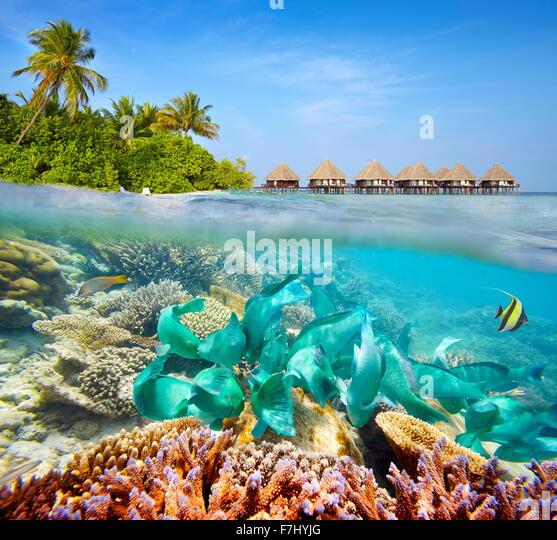 Unterwasserlandschaft auf Malediven-Insel Stockbild