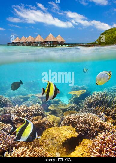 Tropische Landschaft in Malediven, Ari Atoll Stockbild