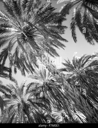 Die Palmeraie in Tozeur. Tozeur, Tunesien. Stockbild