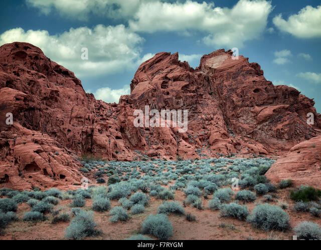 Beifuß und Rock Formation. Valley of Fire State Park, Nevada Stockbild