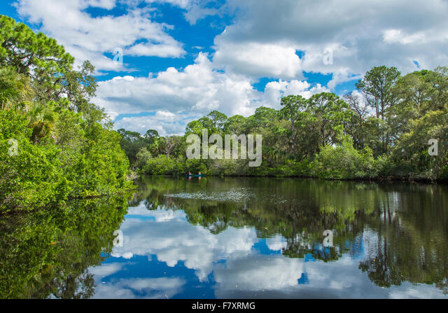 South Creek im Oscar Scherer State Park in Nokomis Florida Stockbild