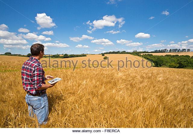 Landwirt mit digital-Tablette in sonnigen ländlichen Gerstenfeld Ernte im Sommer Stockbild