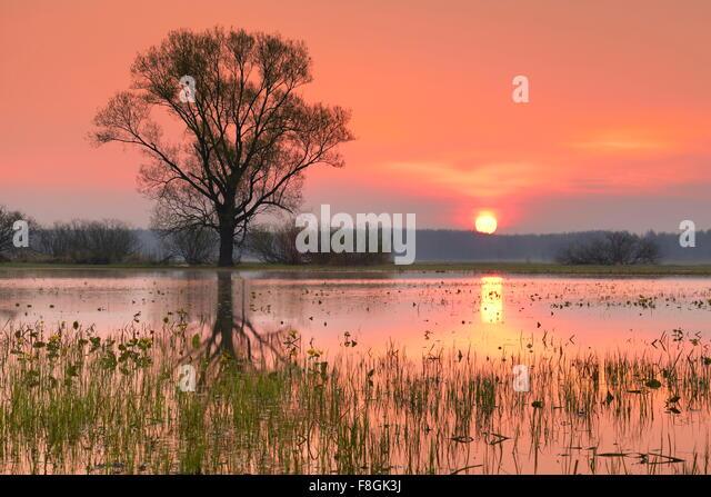 Sunrise Landschaft, Nationalpark Biebrza-Flusstal, Polen Stockbild