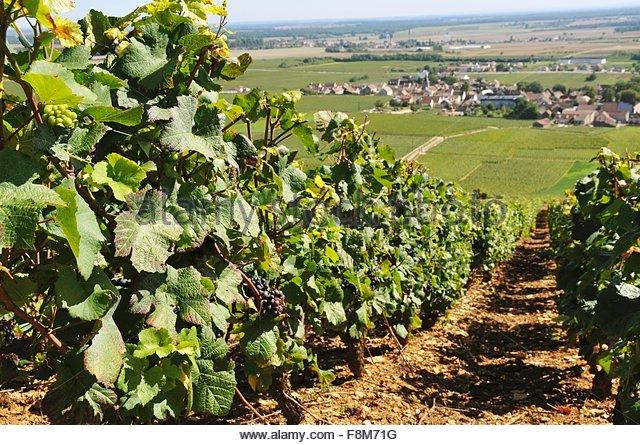 Weingut Romanée-Contie Stockbild