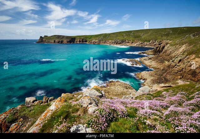 Meer Sparsamkeit wächst auf der Klippe am Nanjizal, Cornwall Stockbild