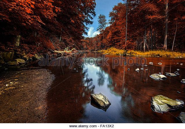 Dichten Wald mit roten Blättern und einem schönen See mit Cloud und Baum Reflexionen in North Connecticut Stockbild