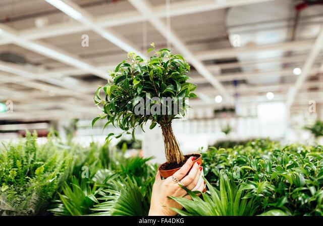 Abgeschnitten Bild junge Frau mit Topfpflanze im Garten-center Stockbild