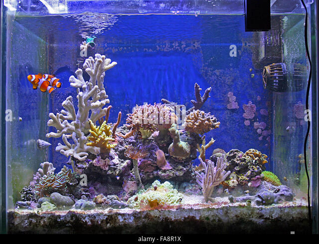 fish tank stockfotos fish tank bilder alamy. Black Bedroom Furniture Sets. Home Design Ideas