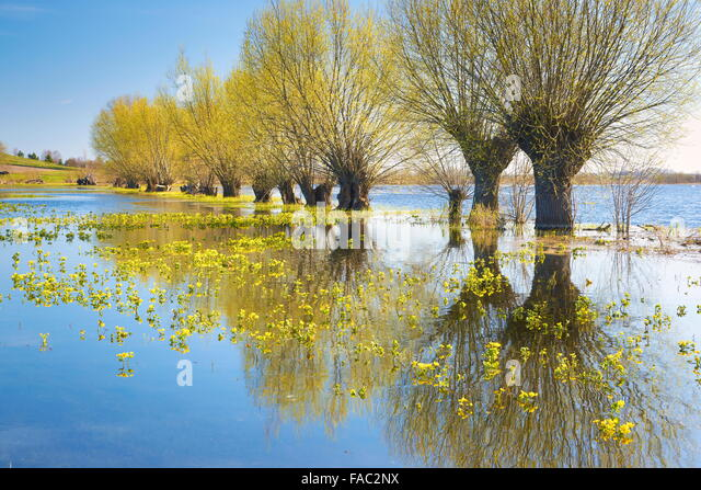 Frühlingslandschaft, Nationalpark Biebrza-Flusstal, Polen Stockbild