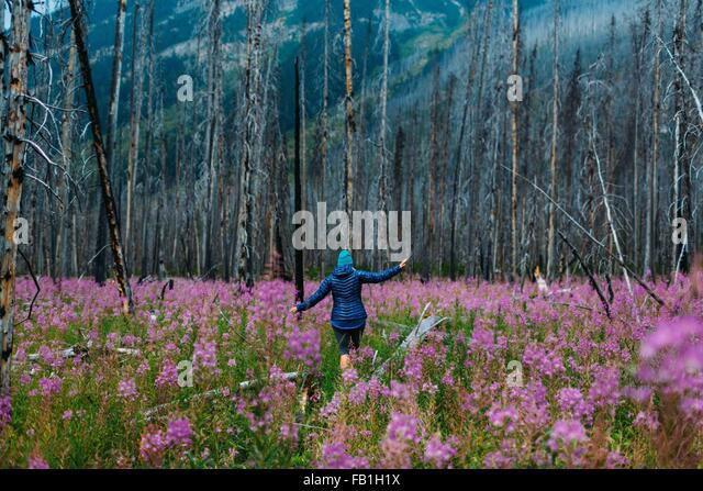 Ansicht von hinten Mitte erwachsenen Frau balancieren auf umgestürzten Baum im Bereich von Wildblumen, Moraine Stockbild