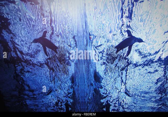 Reflexion der Pinguin im Aquarium Aquarium schwimmen Stockbild