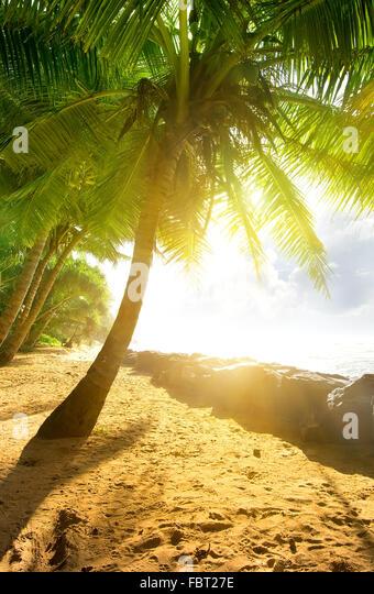 Sonne, Palmen und Meer Stockbild
