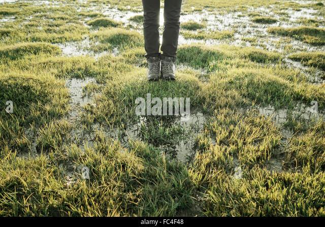 Wanderung in einem Sumpf in der Mongolei Stockbild