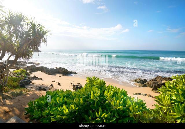 Exotische Pflanzen auf einem sandigen Strand des Indischen Ozeans Stockbild
