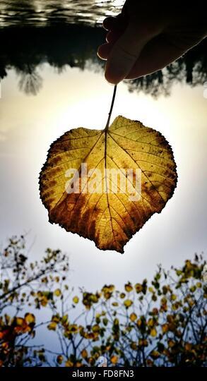 Bild von Hand mit Herbstblatt gegen Himmel in der Abenddämmerung beschnitten Stockbild