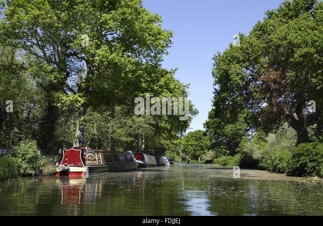 Narrowboats vertäut am Ufer am Fluss Wey Navigationen, Surrey. Stockbild