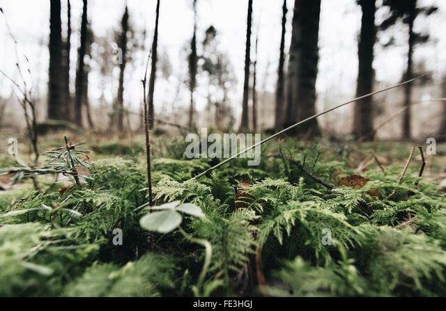 stuttgart forest stockfotos stuttgart forest bilder alamy. Black Bedroom Furniture Sets. Home Design Ideas