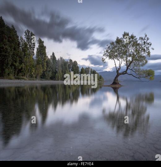 Reflexion der Bäume im Wasser Stockbild