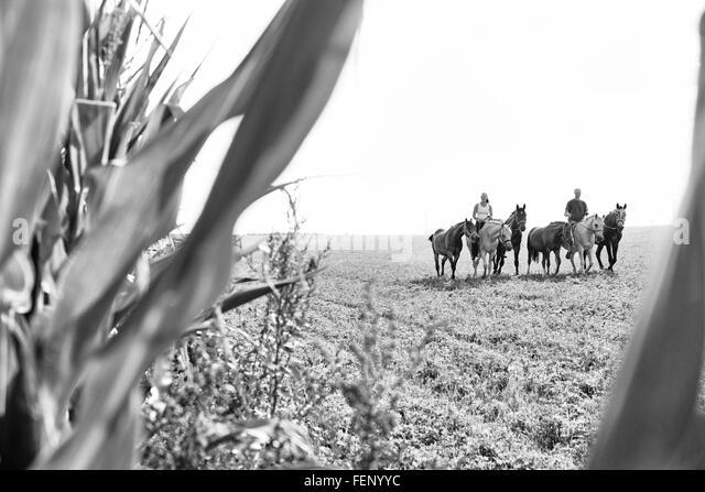 B&W Bild von Mann und Frau Reiten und sechs Pferde im Feld Stockbild