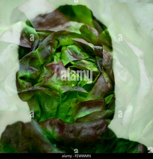 Doppelbelichtung Bild von Silhouette Mensch und Pflanze Stockbild