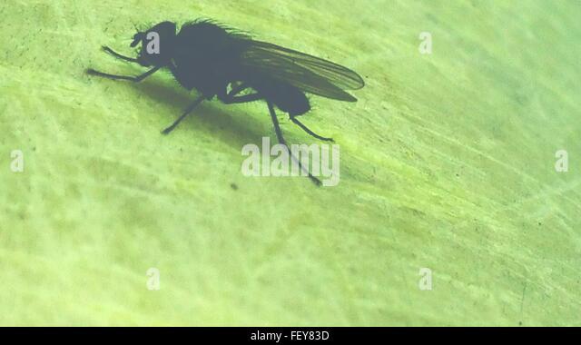Nahaufnahme eines Insekts auf Grünfläche Stockbild