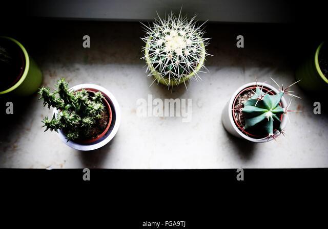 High Angle View Of Topfpflanzen auf Fensterbank zu Hause Stockbild