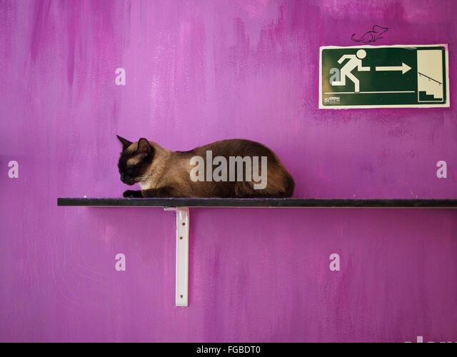 Katze auf Plank lila Wand ruht Stockbild