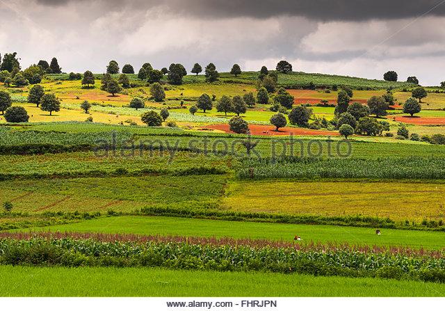Felder in der Nähe von Kalaw, Shan State in Myanmar Burma Stockbild