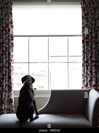 Hund aus Fenster Stockbild