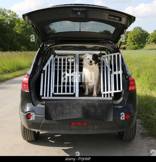 Hund in Einem Auto Auf Reisen Stockbild
