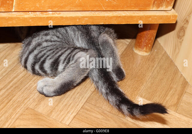Katze versteckt sich Stockbild