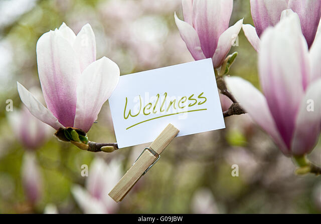 """Wellness befestigt, eine blühende Magnolie Stockbild"