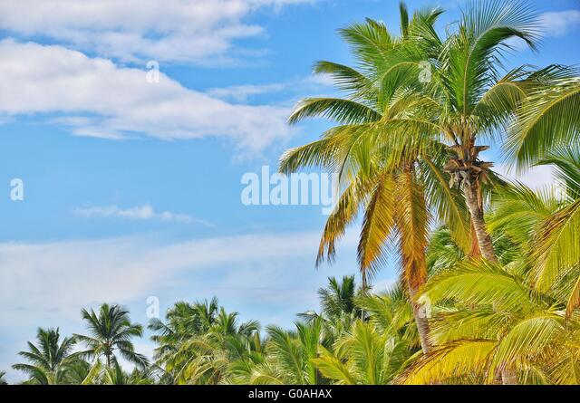 Caribian Stockbild