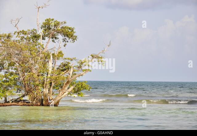 Karibik Meer Mexiko Stockbild