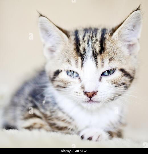 Hauskatze, Hauskatze, Portrait von einem kitty Stockbild