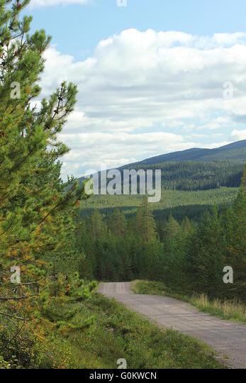 Kiesweg in den schwedischen Bergen in Dalarna. Stockbild