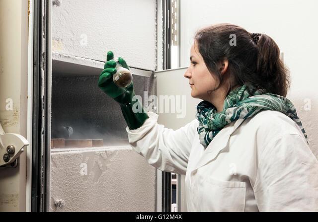 Forscher untersuchen Pilzkulturen in der Labor-Tiefkühltruhe. Stockbild