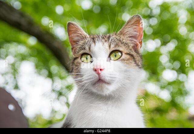 Neugierige Katze Porträt unter Baum Stockbild