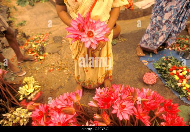 Lotus-Blume-Verkäufer außerhalb der Sri Aurobindo Ashram. Pondicherry, Tamil Nadu, Indien. Stockbild
