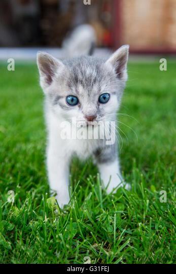 Neugierige Katze steht im Rasen Stockbild