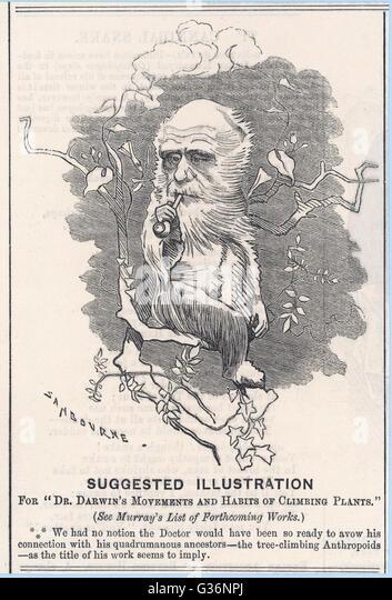 Charles Darwin (1809-1882) als ein Baumklettern Freilandforschung dargestellt.         Datum: 1875 Stockbild