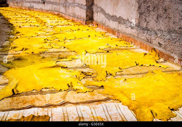 Gelb getönte Leder trocknen in der Sonne in einer Gerberei in Fez, Marokko Stockbild